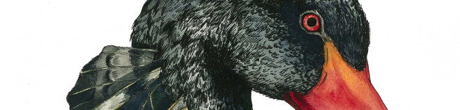 cropped-black-sawn-edit